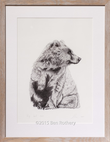 Big Wet Bear A3 print