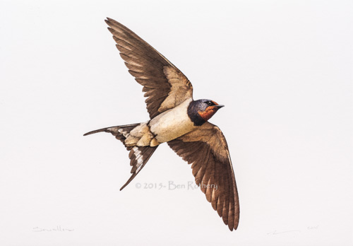 Swallow A4