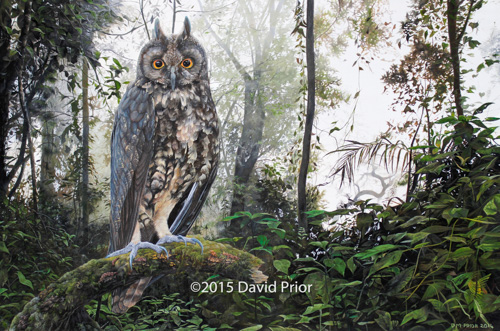 Stygian Owl in a Cloud Forest Dawn - Collectors Edition