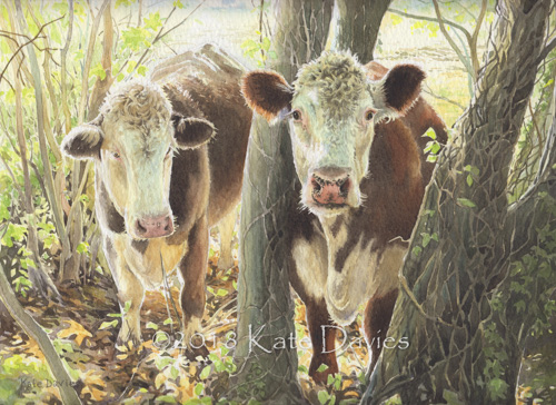 Curious Cows xx/250