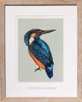 Kingfisher A4 print