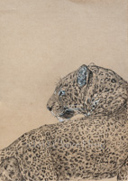 Leopard/ Looking Back