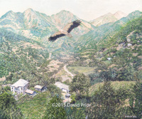 Egyptian Vulture over Central Greece - Collectors Edition