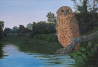 Dusk Settles on Pel's Fishing Owl- Collector's Edition