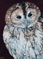 Nelson the Owl