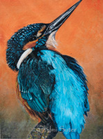 Alfie: Fluffy Kingfisher