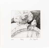 Etching of a Poppy